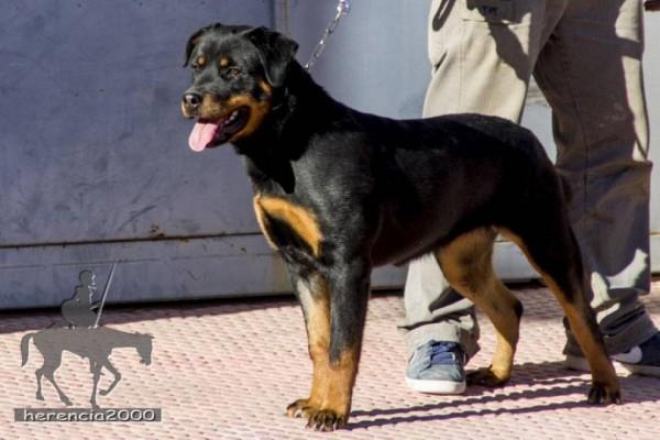 bendicion-de-mascotas-Herencia-San-Anton-2015_01