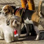 Bendición de mascotas en San Antón